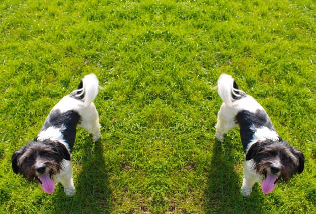 reflective image of dog on grass
