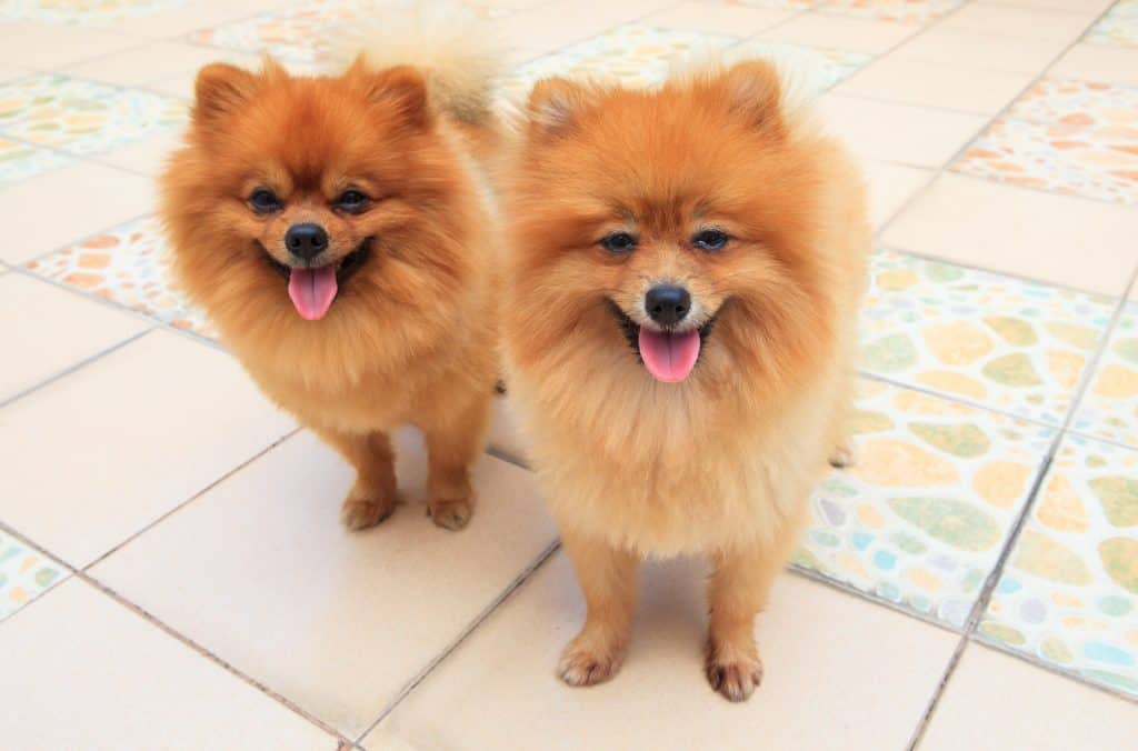 two identical looking dogs