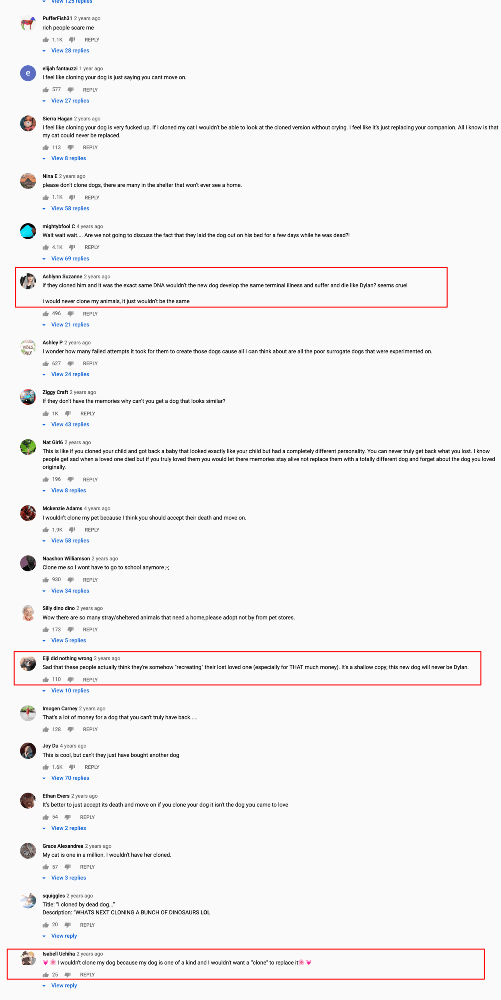comments that people posted after a buzzfeed YouTube video about Dylan, the cloned boxer breed dog