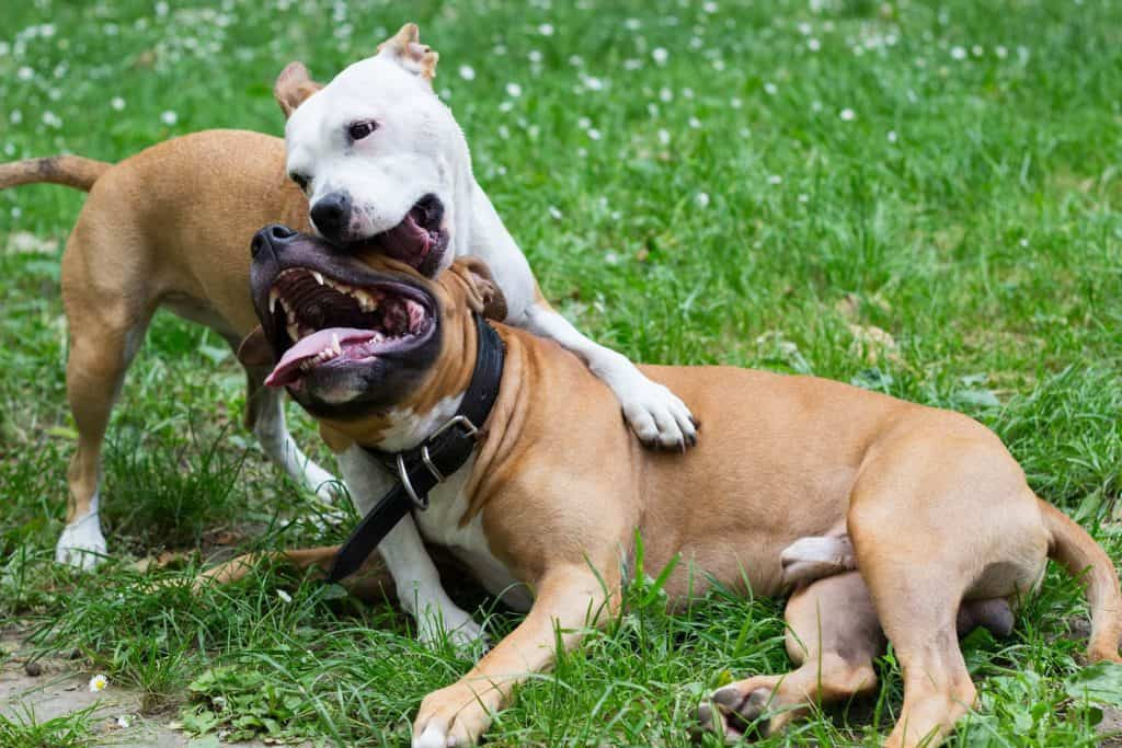 two dogs play fighting