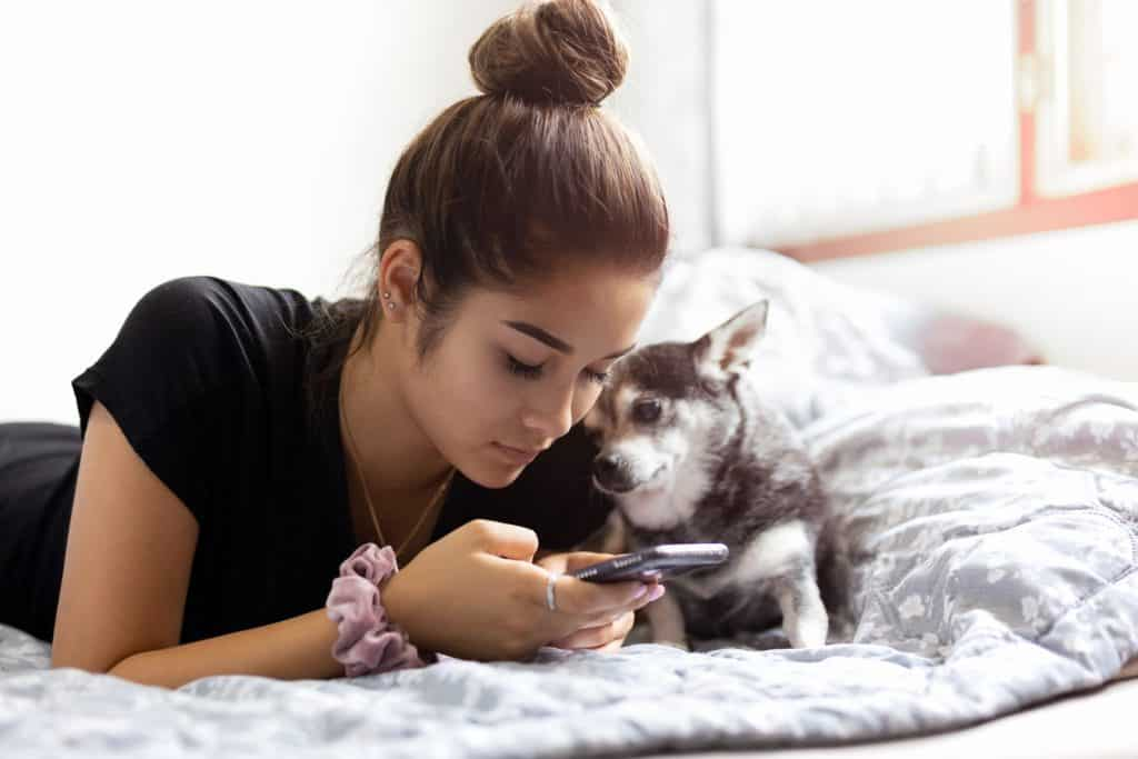 Mixed race teenage girl using cell phone with chihuahua dog in bed