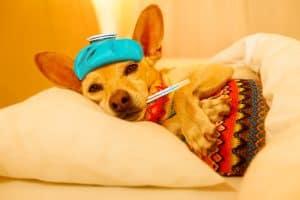 Sick Sleeping Dog