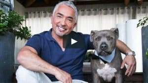 Cesar Millan Dog dog whisperer