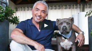 Cesar Millan Dog dog whisperer
