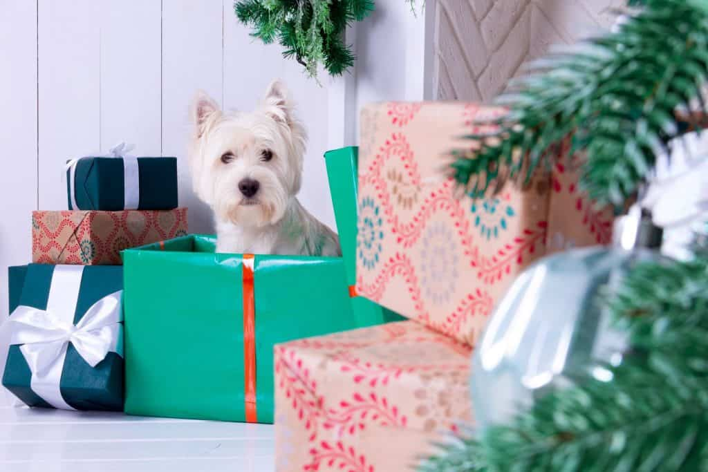 Dog in a sitting in a christmas gift box