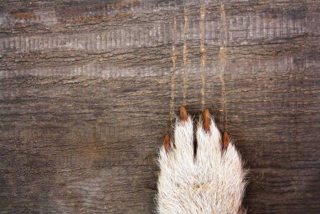 wood block scratched by dogs nails