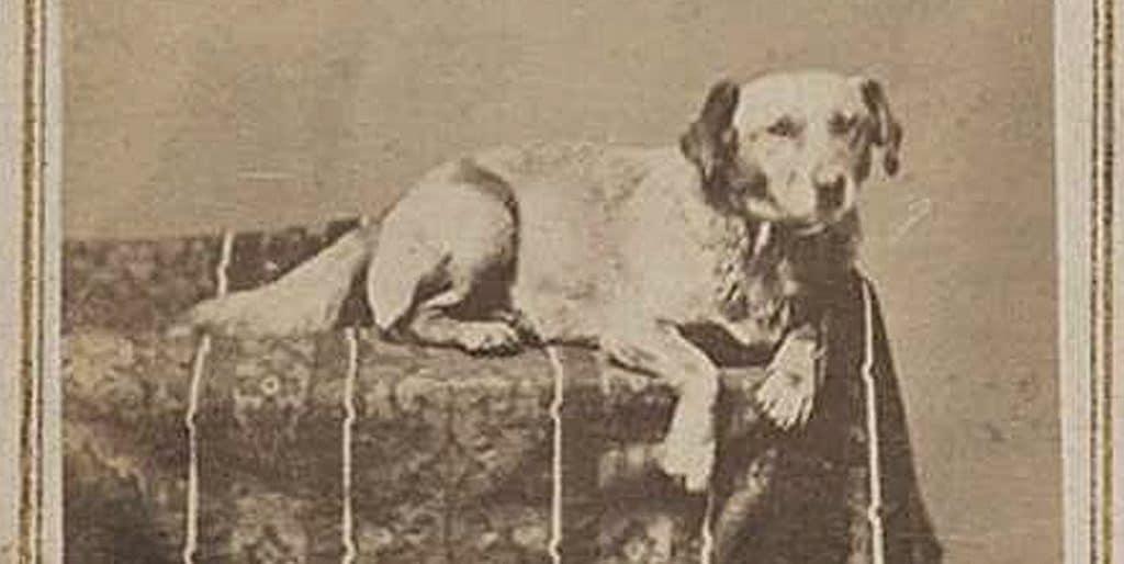 Lincoln dog Fido