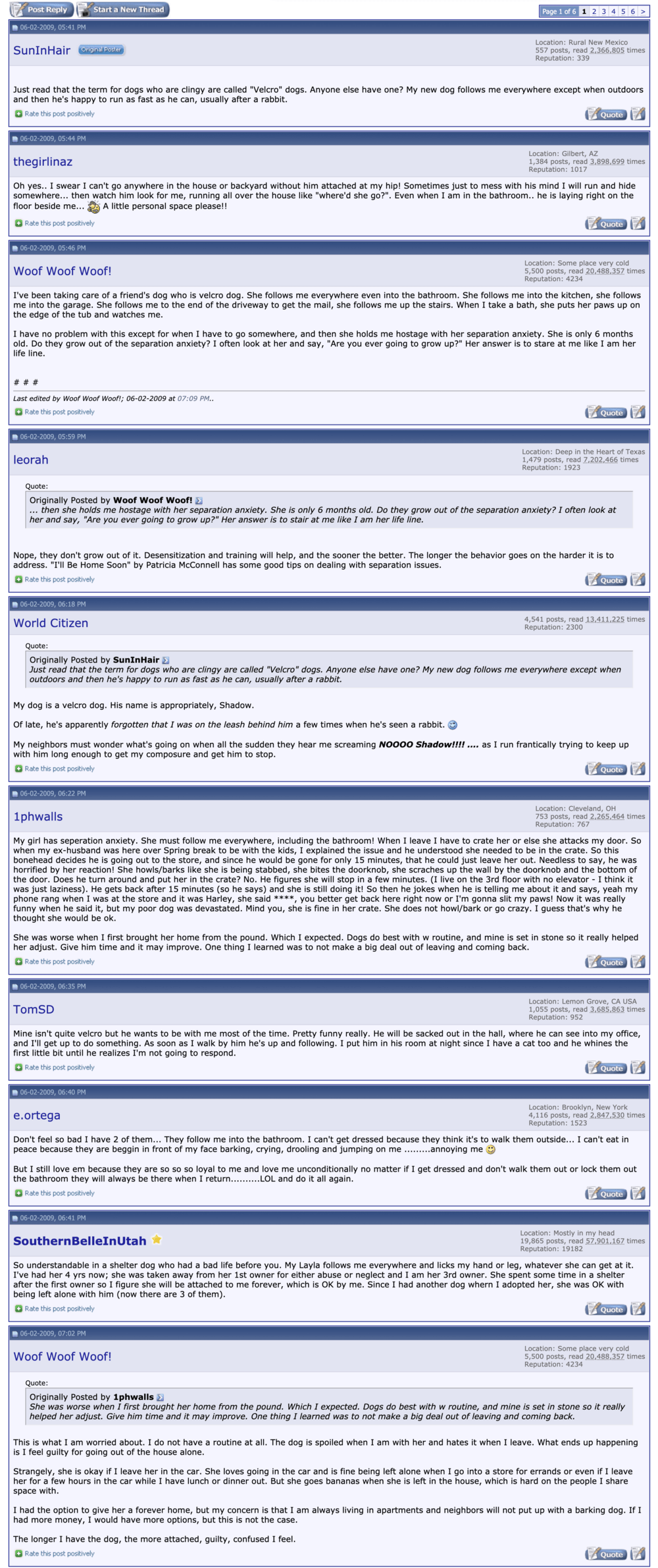 forum comments about velcro dogs