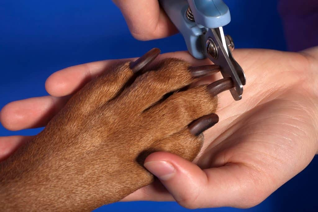 cutting dog nai