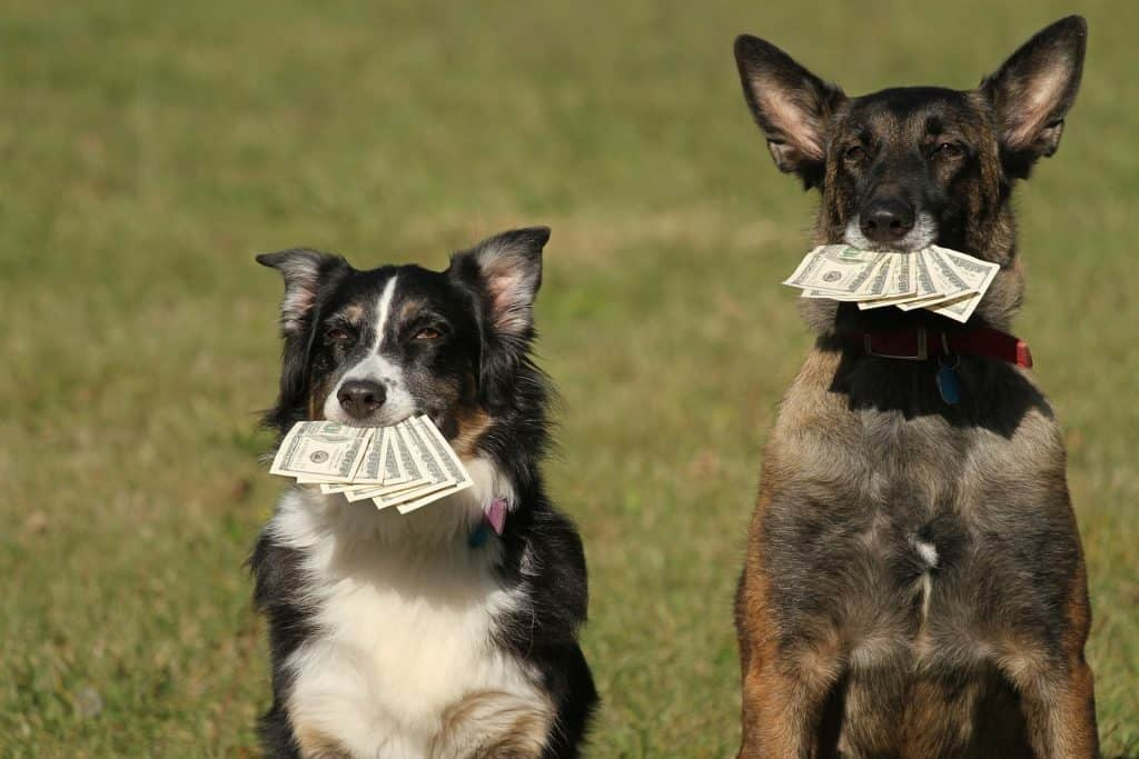 two dogs with cash in their mouths