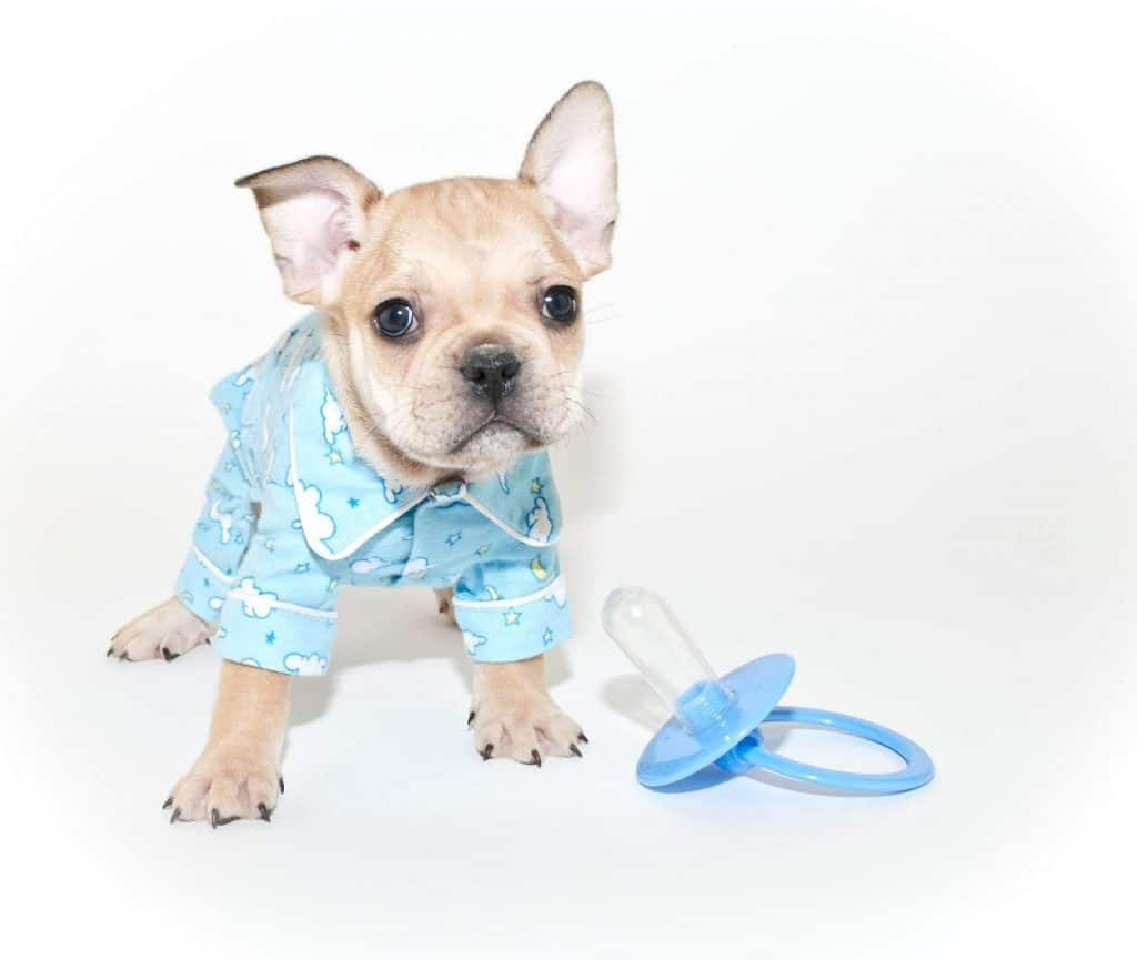 Dog waring baby clothes and standing next to baby pacifier