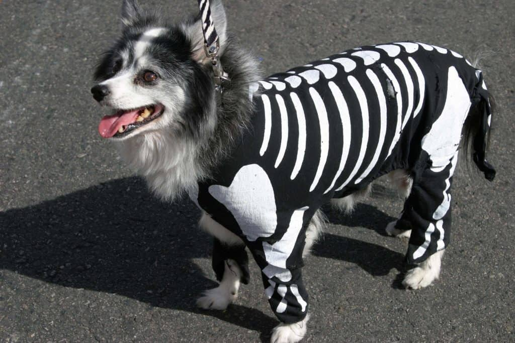 dog in a skeleton costume