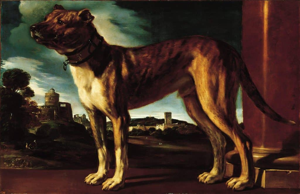 Aldrovani Dog by Guercino Norton Simon Museum