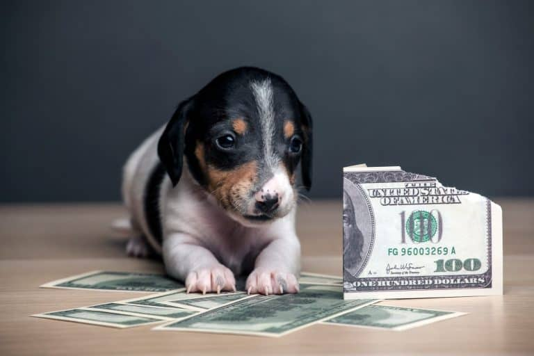 puppy dog surrounded by paper money