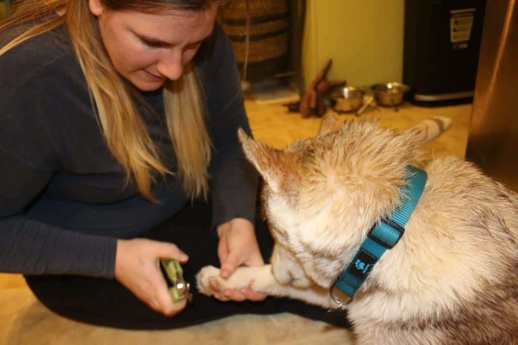 women clipping her dogs nails