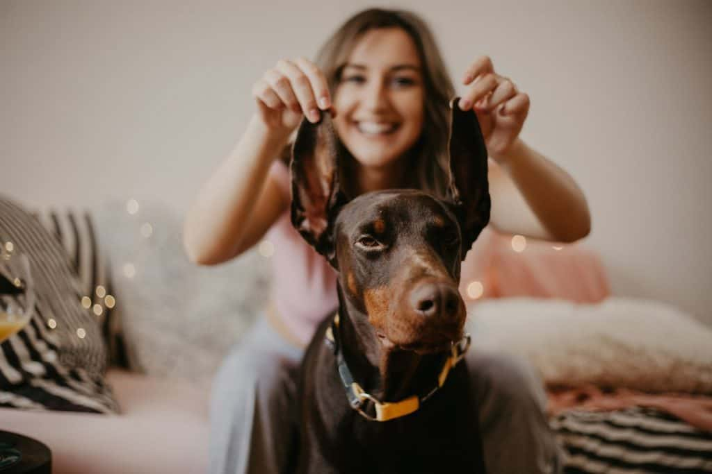 woman playfully holding up the ears of a doberman