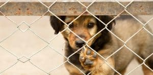 dog behind an iron wire fence