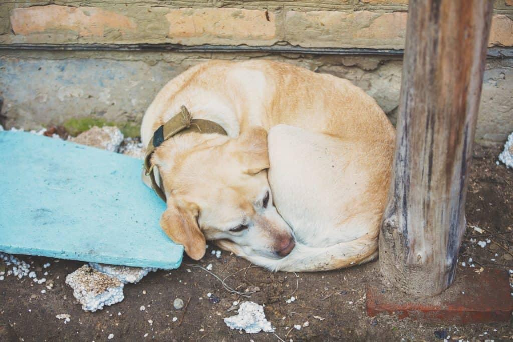 curled up abandoned dog