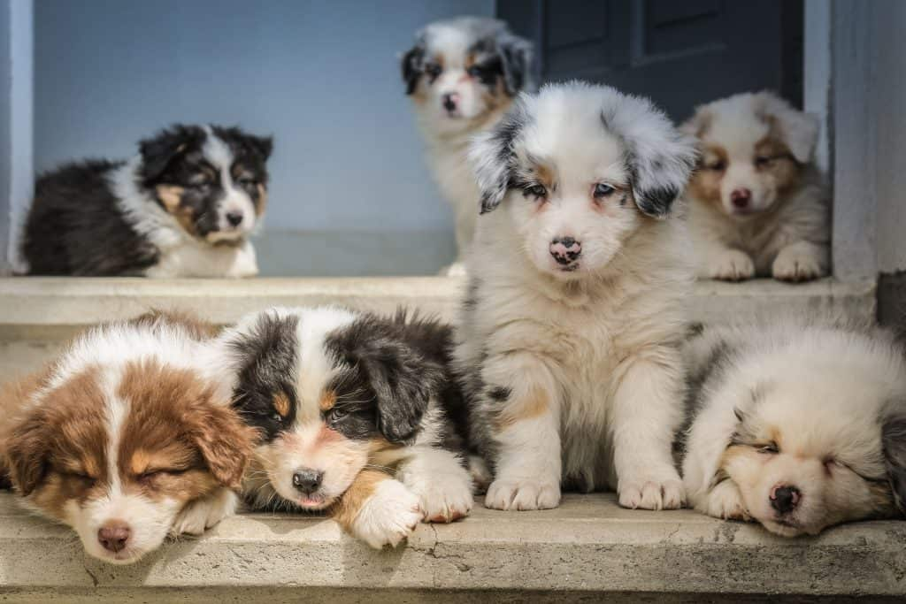collection of puppy dog