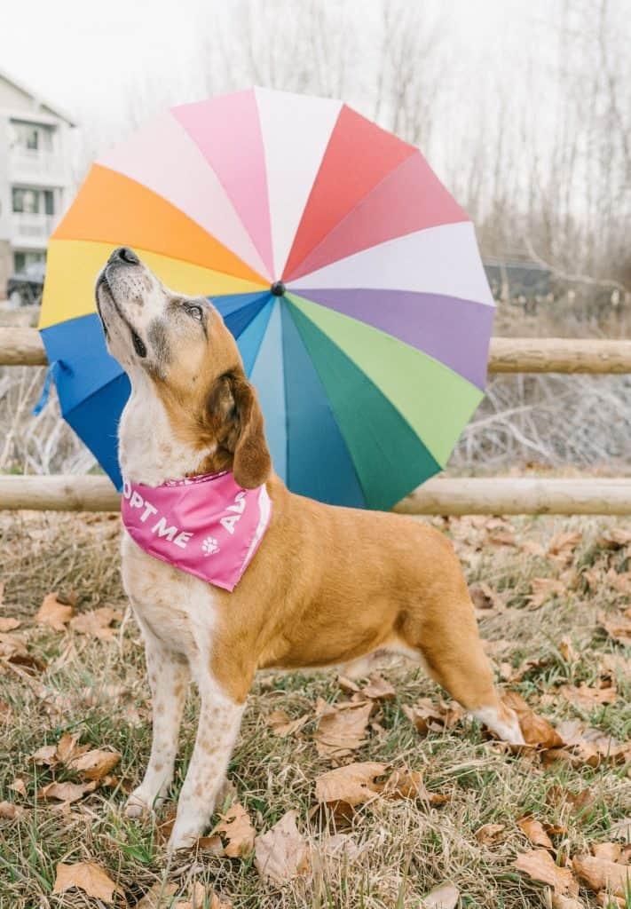 happy dog outdoors in front of rainbow umbrella