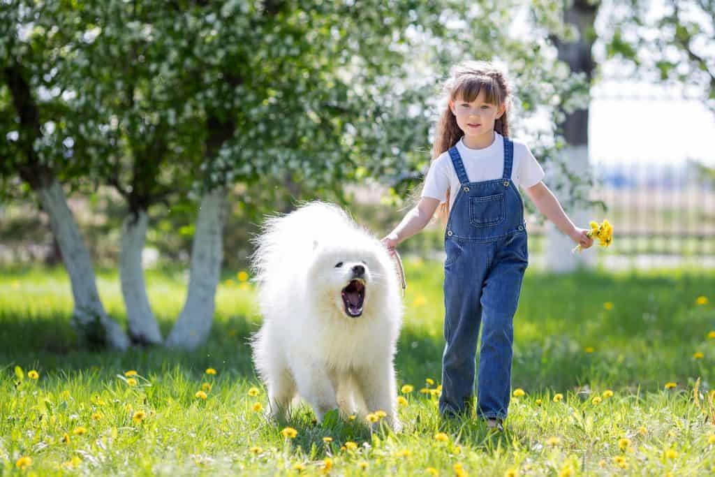 aggressive dog protecting child