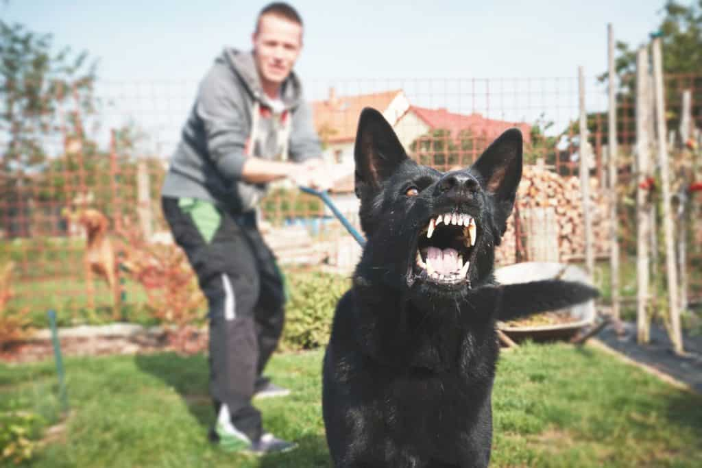 black aggressive dog with handler