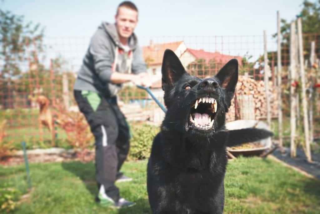 black aggressive dog with handler