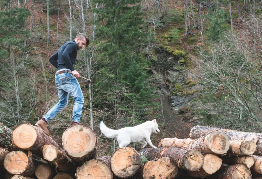 man and dog walking on huge logs in the woods
