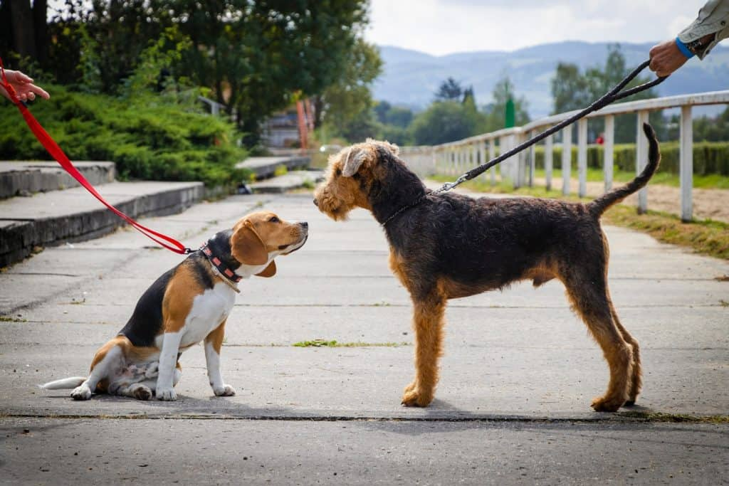 two dogs face off.