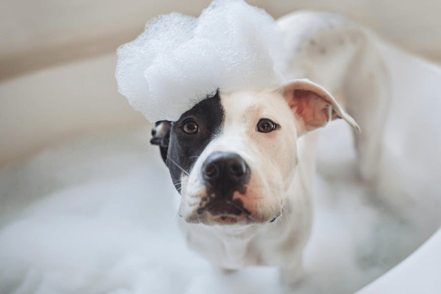 dog in bath with bubbles