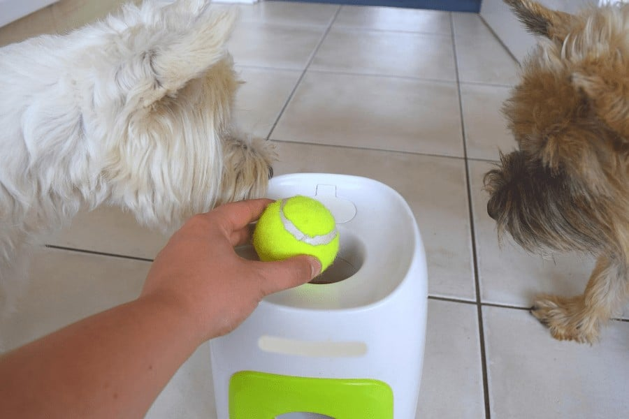 automatic dog fetch toy