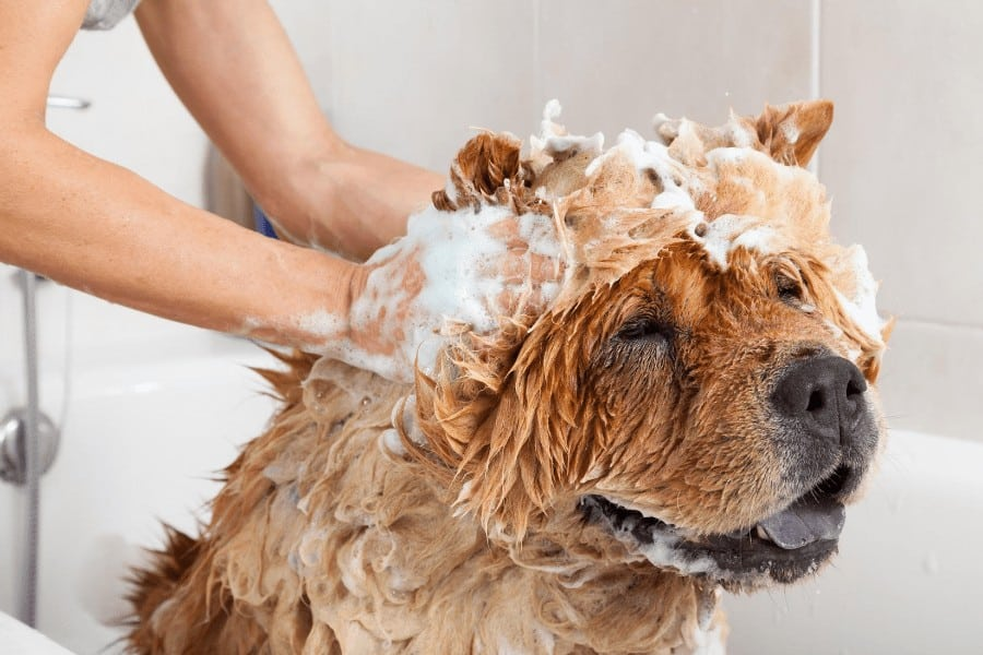 dog being washed in a bath tub