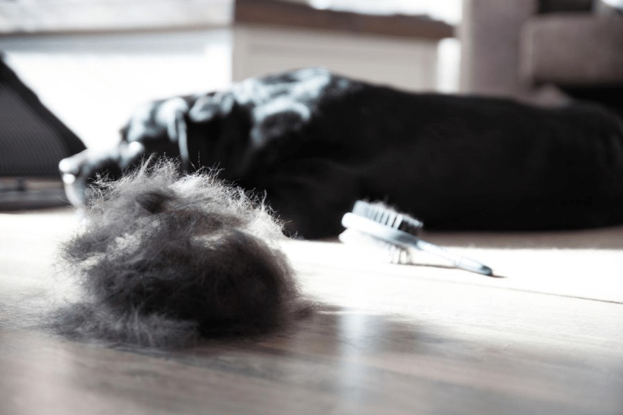 dog laying next to fur hairball
