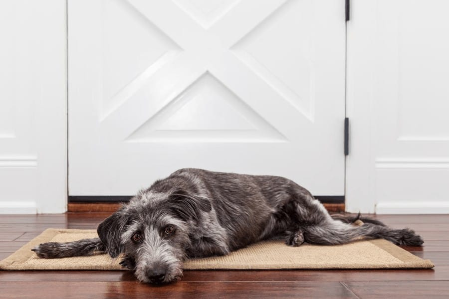 Dog laying on a door mat