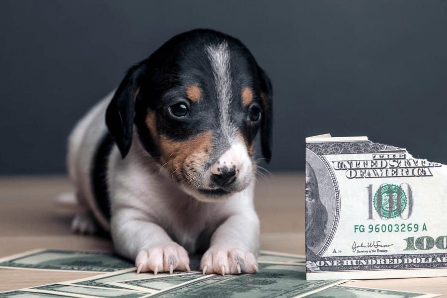 puppy placed next to a 100 dollar bill