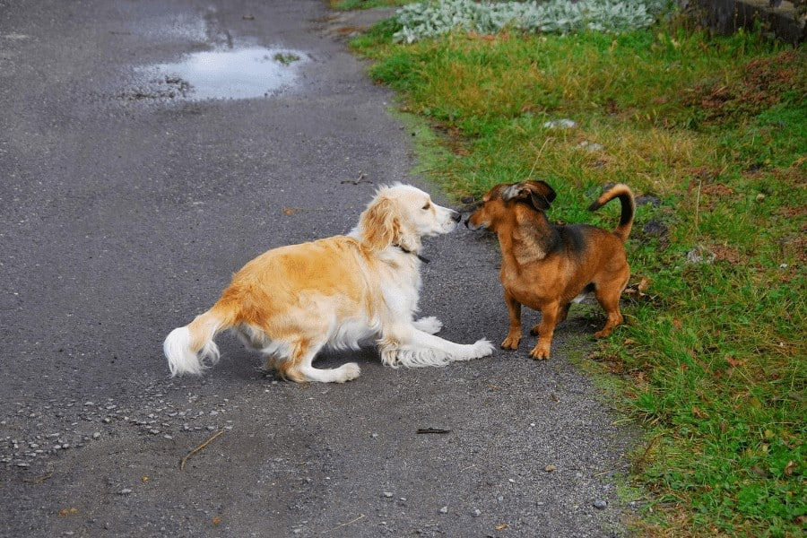 two dogs playing with each other